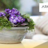plantas faciles de cuidar departamento soltero